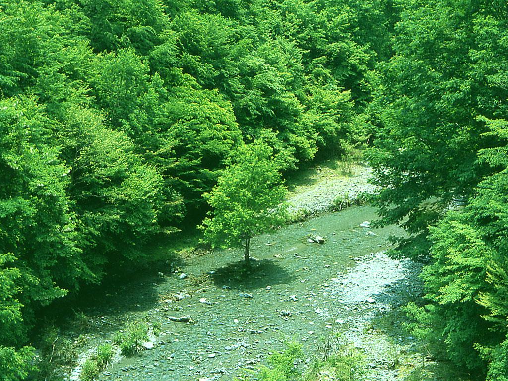 この川 どこの川 気になる(川
